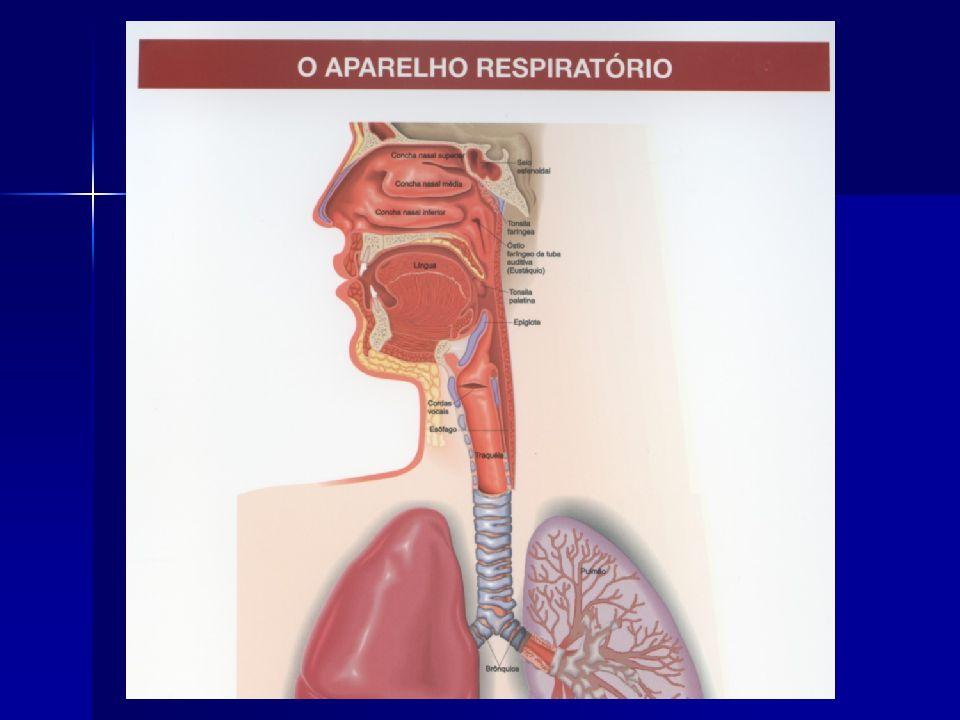 As fossas nasais filtram, aquecem e umidificam o ar que segue pela via aérea inferior para os pulmões.