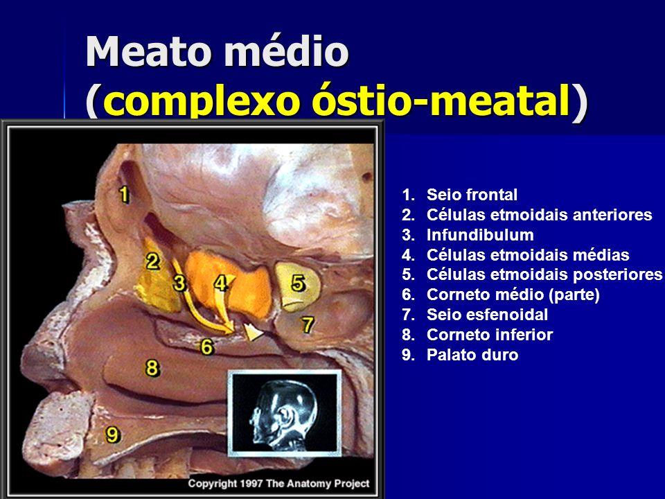 Meato médio (complexo óstio-meatal)