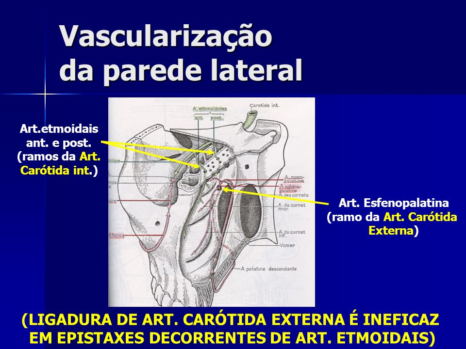 Vascularização da parede lateral