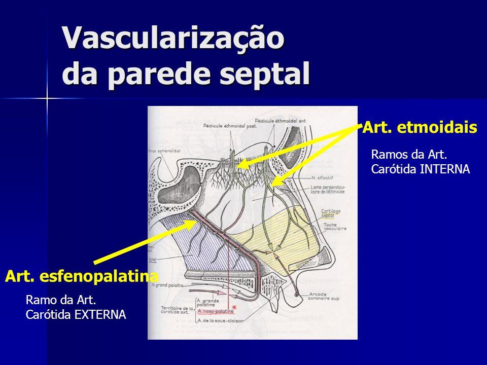Vascularização da parede septal