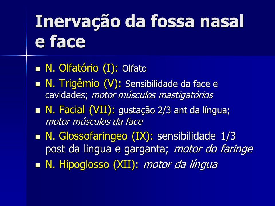 Inervação da fossa nasal e face