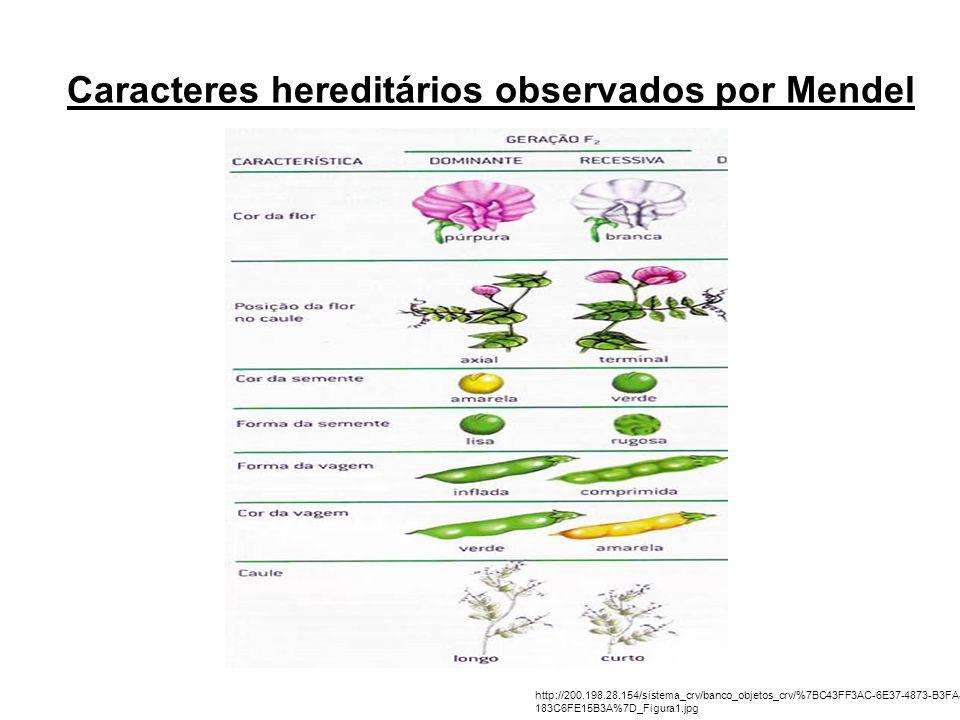 Caracteres hereditários observados por Mendel