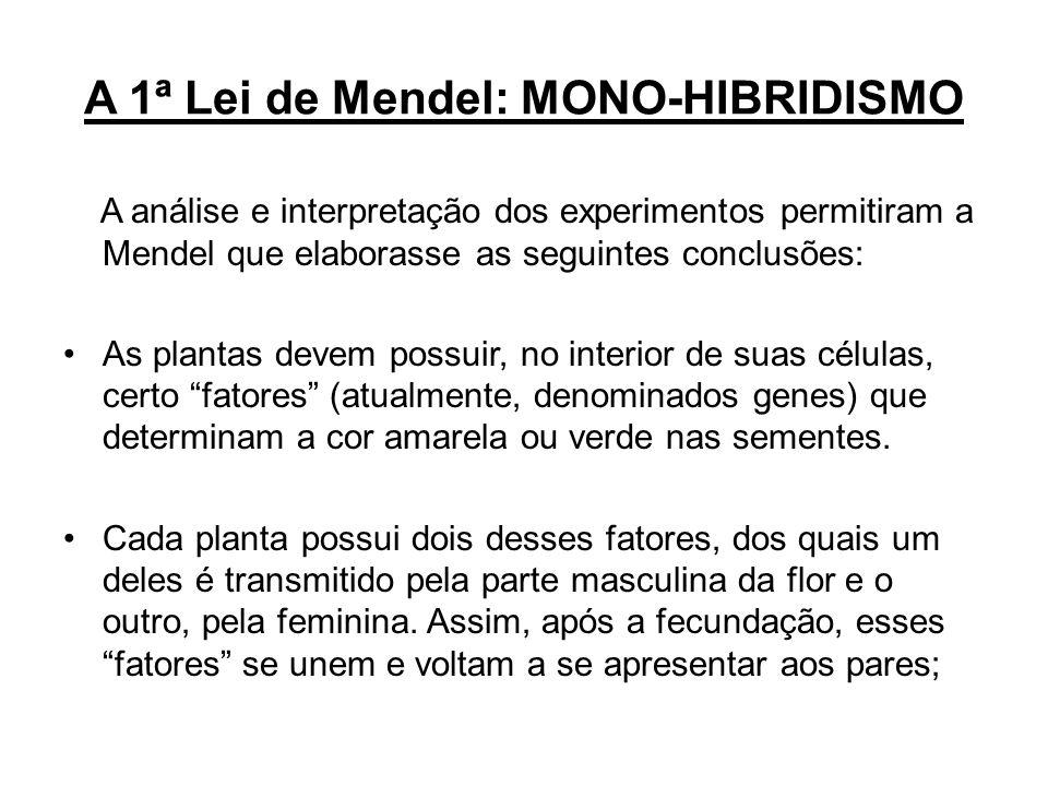 A 1ª Lei de Mendel: MONO-HIBRIDISMO