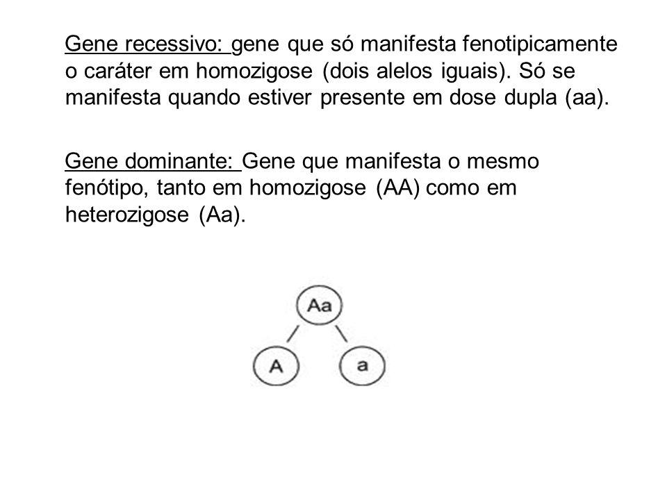 Gene recessivo: gene que só manifesta fenotipicamente o caráter em homozigose (dois alelos iguais).