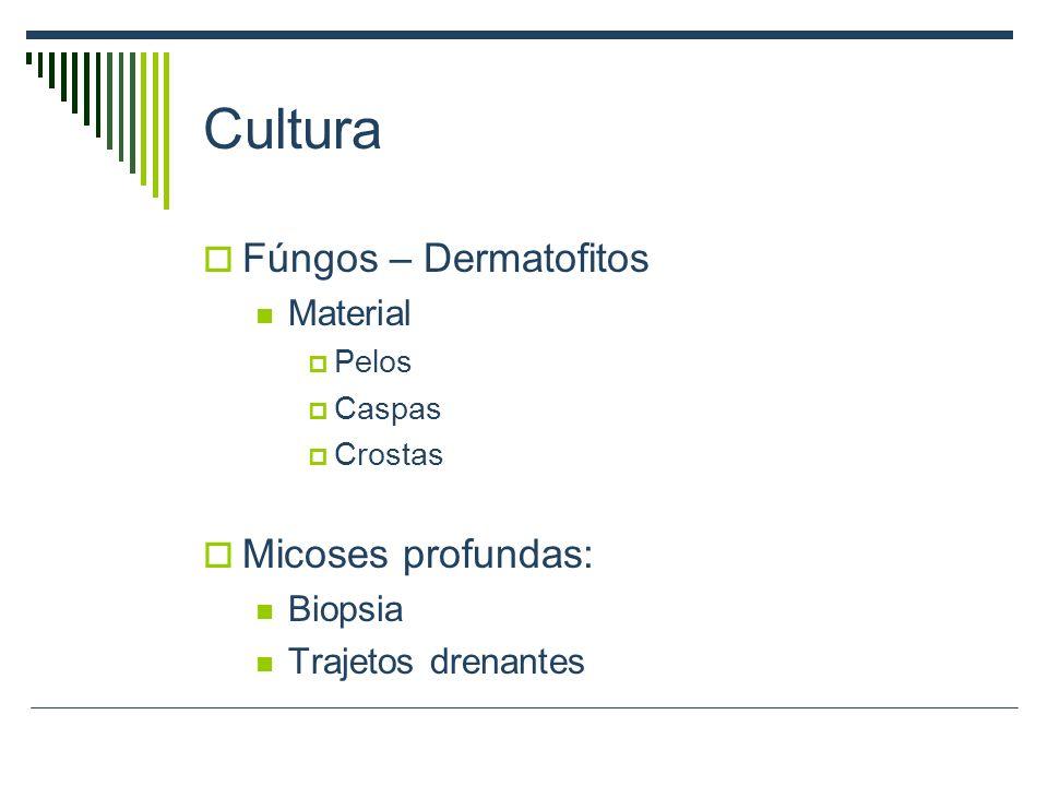 Cultura Fúngos – Dermatofitos Micoses profundas: Material Biopsia