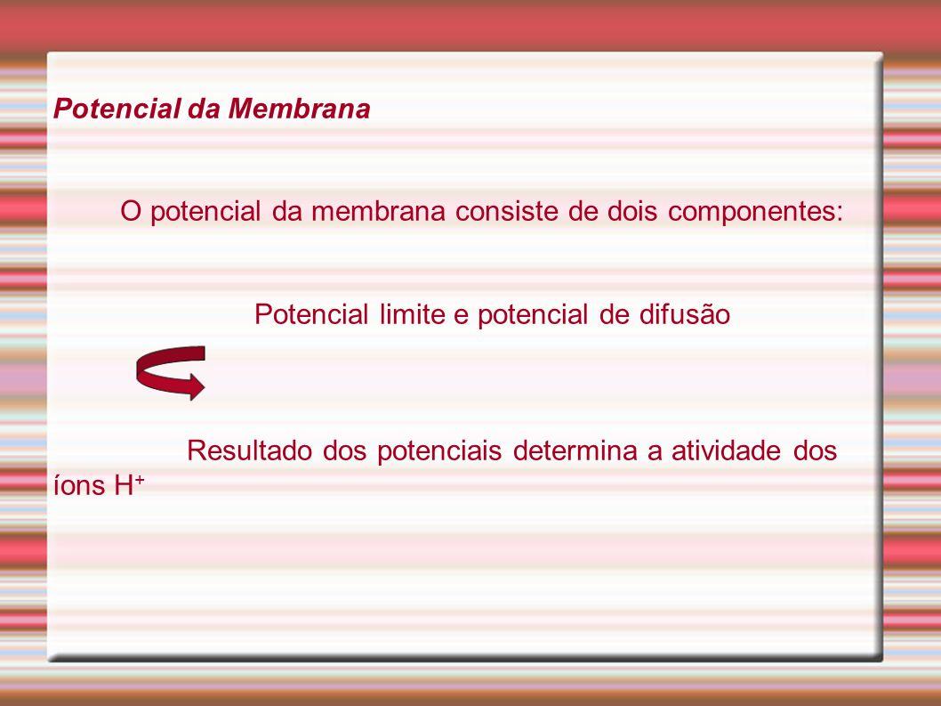 Potencial da Membrana O potencial da membrana consiste de dois componentes: Potencial limite e potencial de difusão.