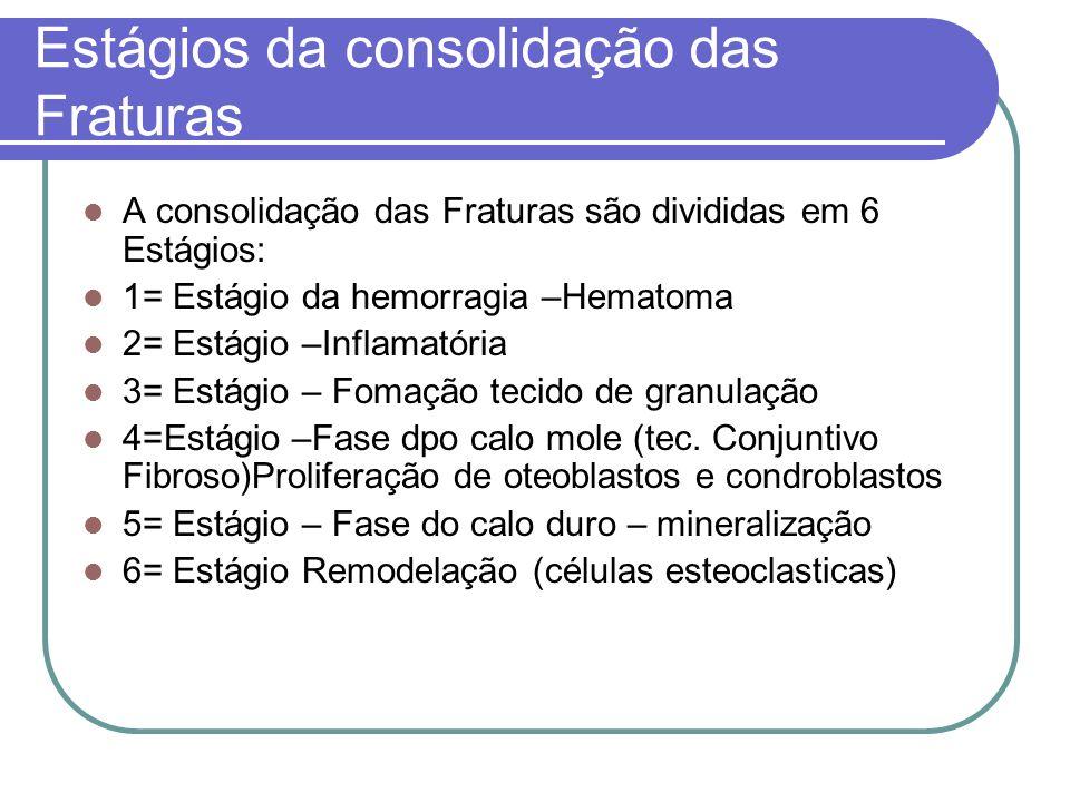 Estágios da consolidação das Fraturas