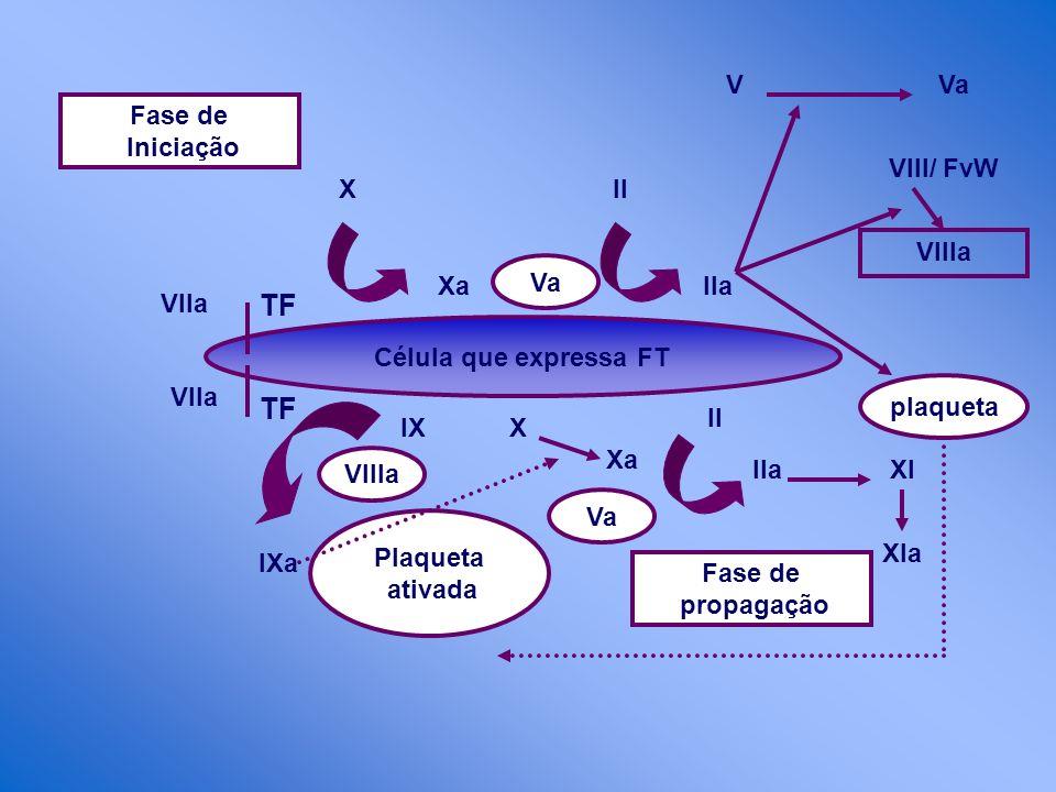 TF TF V Va Fase de Iniciação VIII/ FvW X II VIIIa Va Xa IIa Vlla