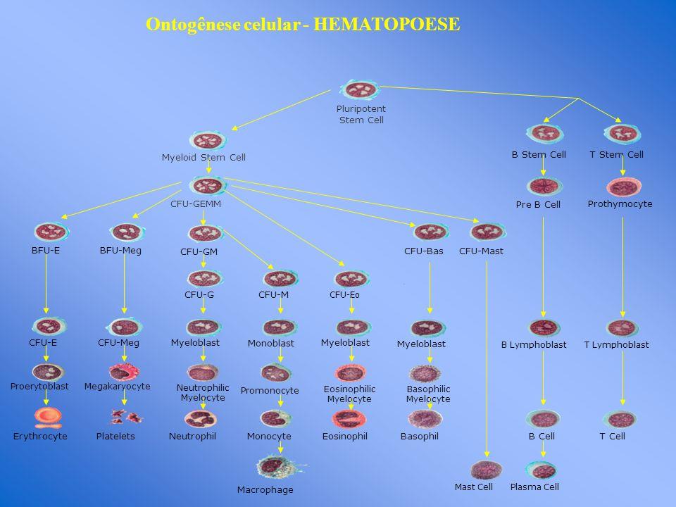 Ontogênese celular - HEMATOPOESE