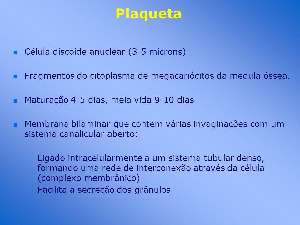 Plaqueta Célula discóide anuclear (3-5 microns)