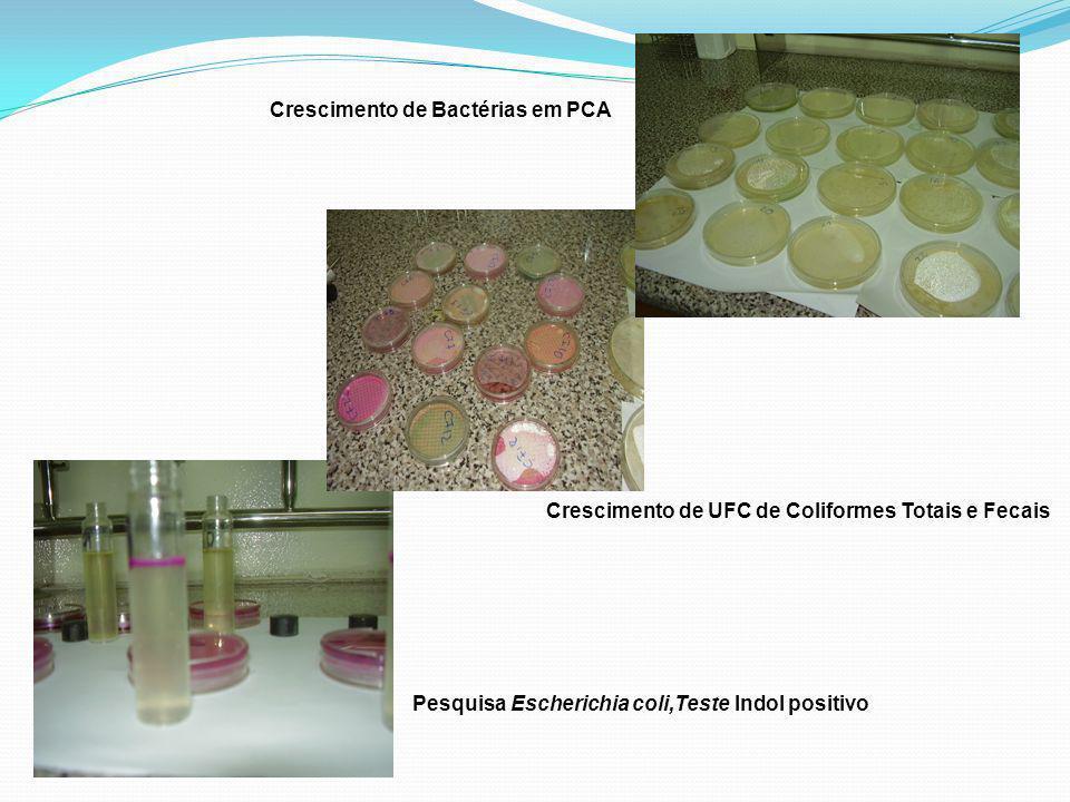 Crescimento de Bactérias em PCA