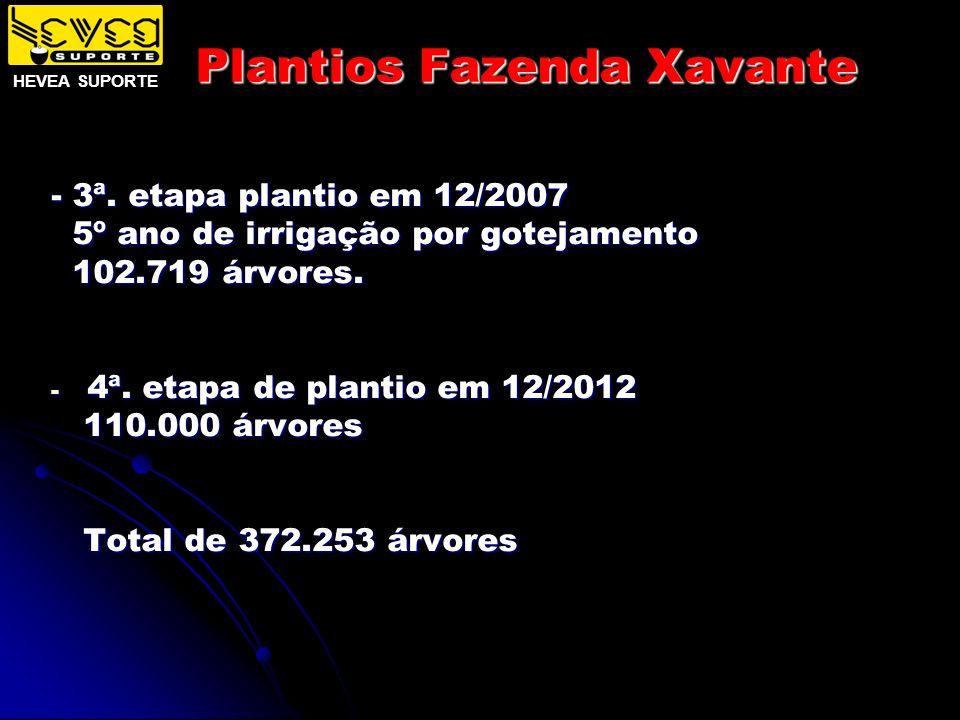 Plantios Fazenda Xavante