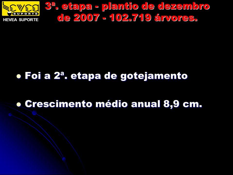 3ª. etapa - plantio de dezembro de 2007 - 102.719 árvores.
