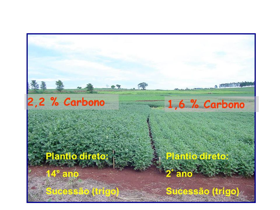 2,2 % Carbono 1,6 % Carbono Plantio direto: 14° ano Sucessão (trigo)