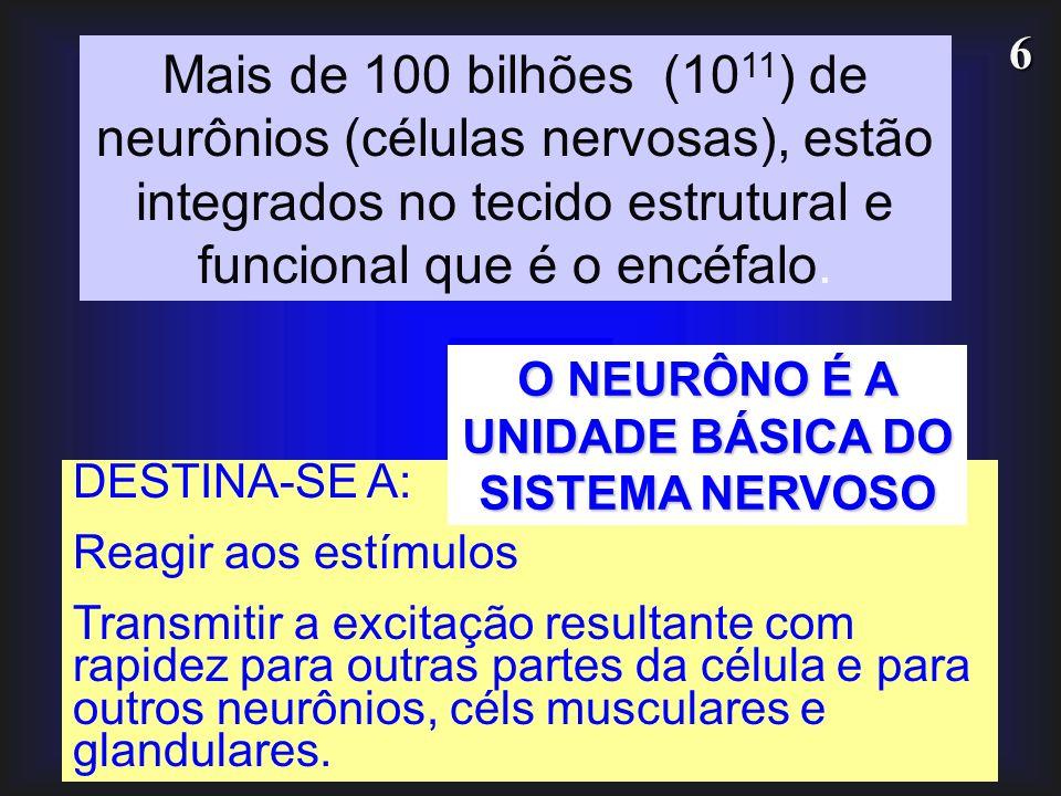 O NEURÔNO É A UNIDADE BÁSICA DO SISTEMA NERVOSO