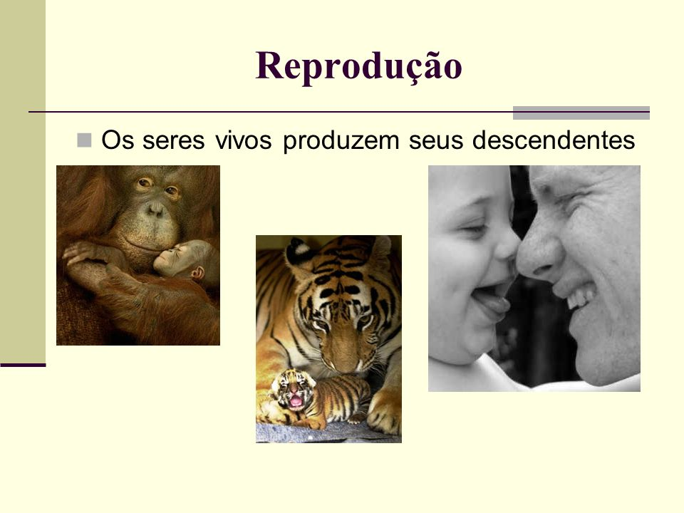 Reprodução Os seres vivos produzem seus descendentes