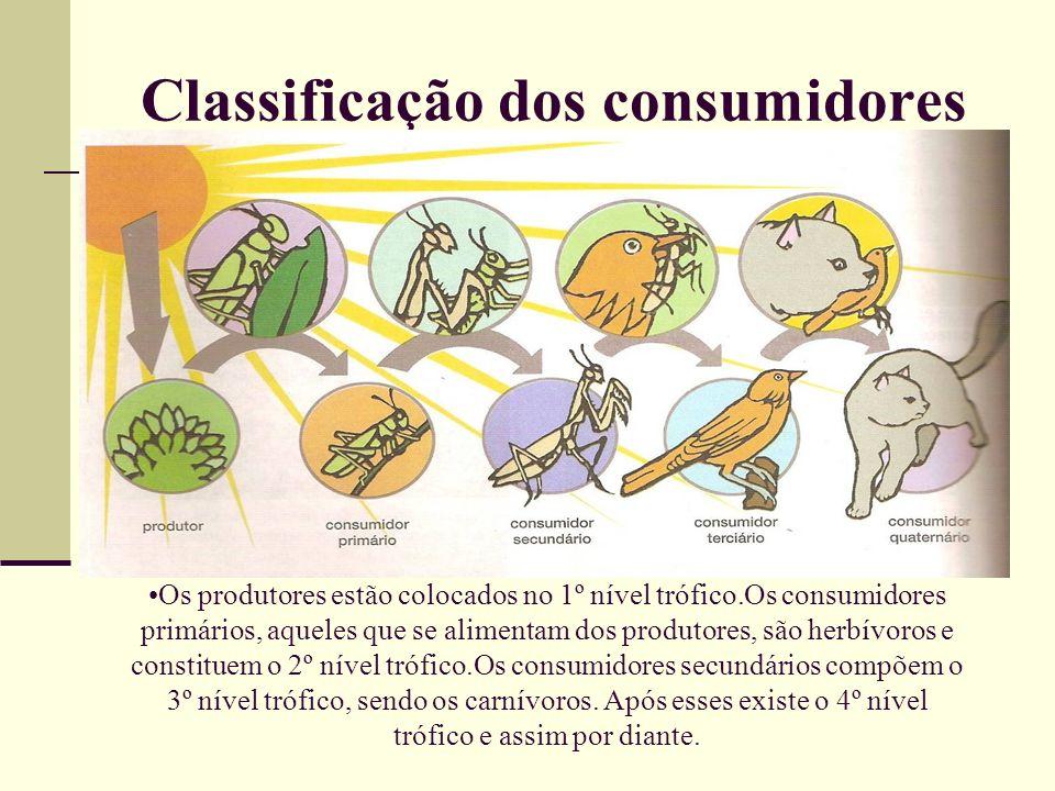 Classificação dos consumidores