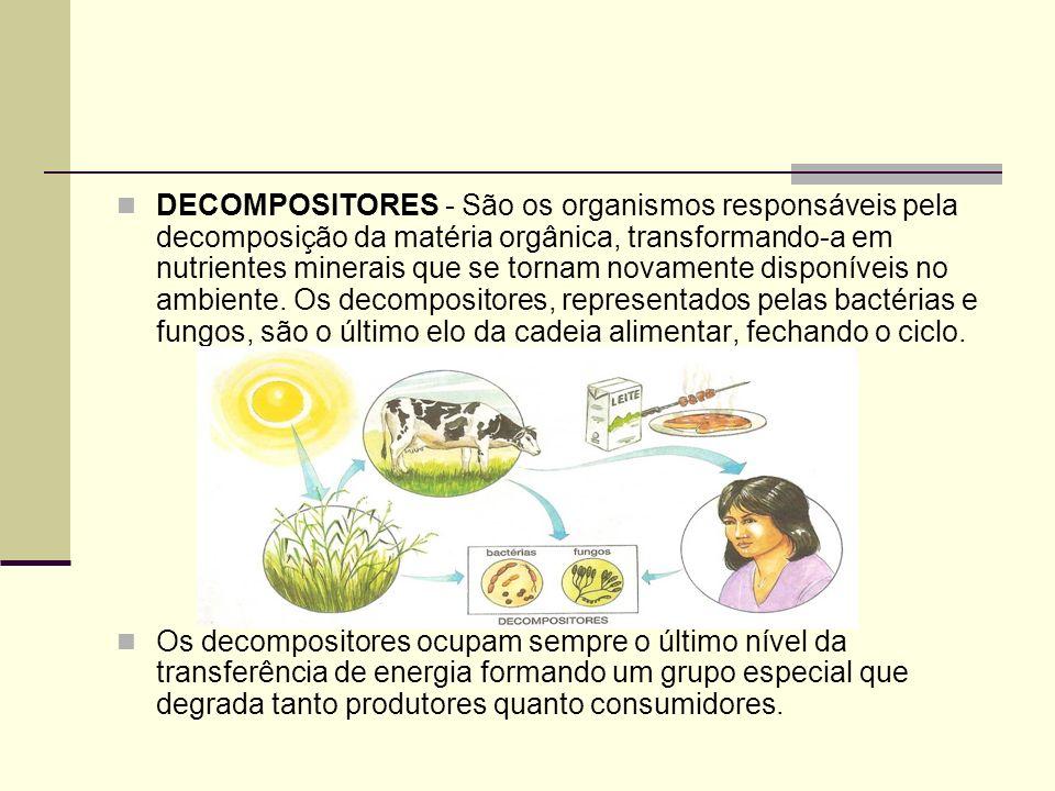 DECOMPOSITORES - São os organismos responsáveis pela decomposição da matéria orgânica, transformando-a em nutrientes minerais que se tornam novamente disponíveis no ambiente. Os decompositores, representados pelas bactérias e fungos, são o último elo da cadeia alimentar, fechando o ciclo.