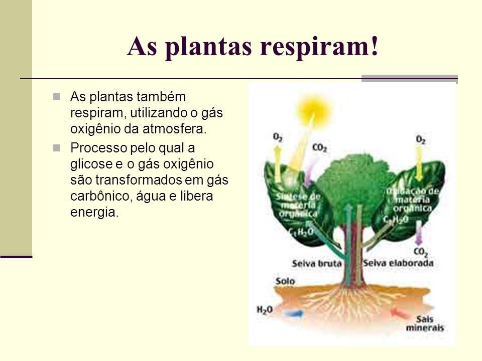 As plantas respiram!As plantas também respiram, utilizando o gás oxigênio da atmosfera.