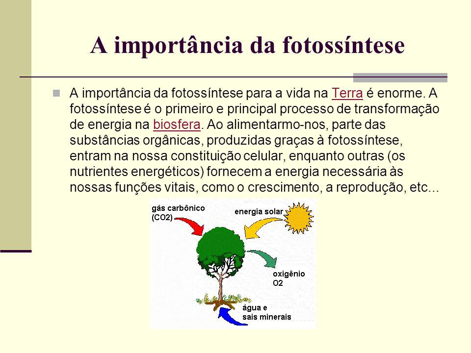 A importância da fotossíntese