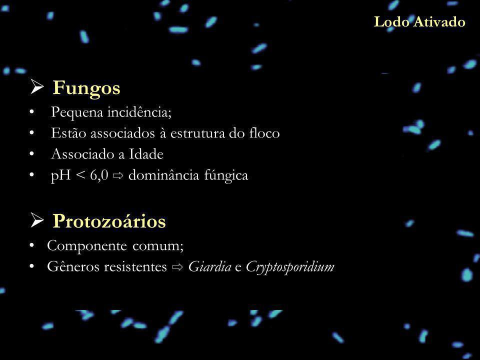 Fungos Protozoários Lodo Ativado Pequena incidência;
