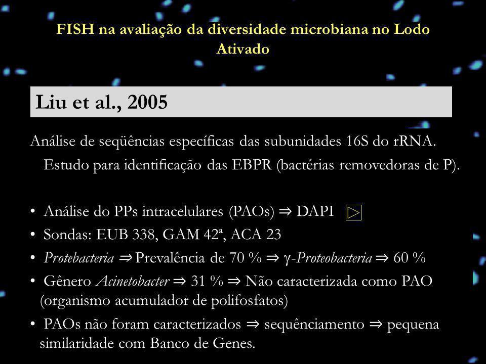 FISH na avaliação da diversidade microbiana no Lodo Ativado