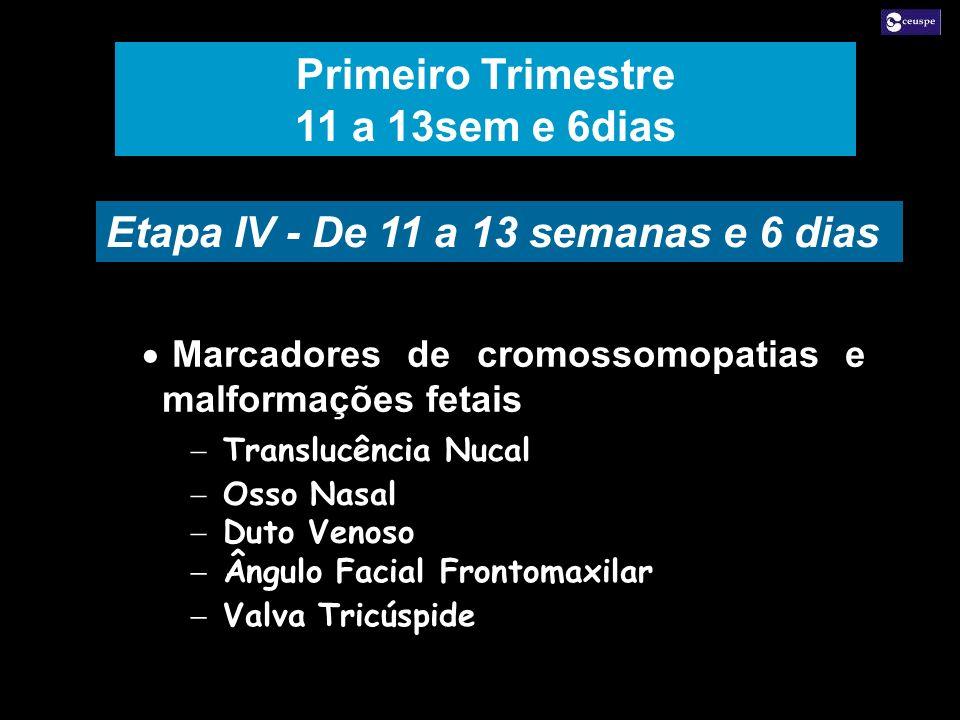 Primeiro Trimestre 11 a 13sem e 6dias