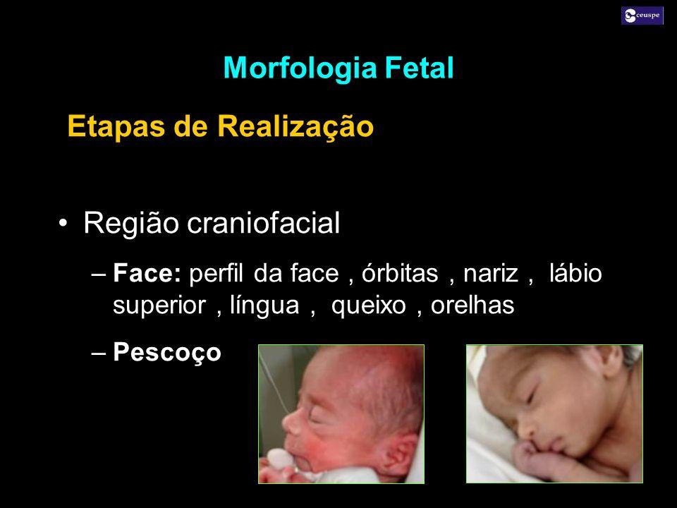 Morfologia Fetal Etapas de Realização Região craniofacial