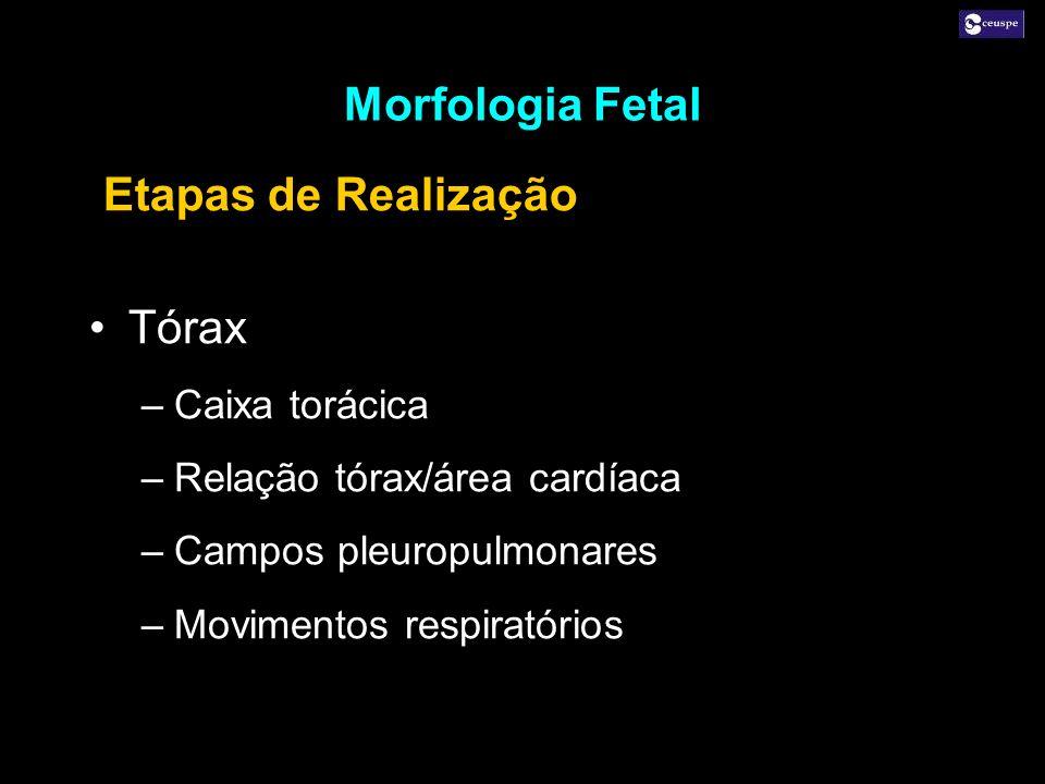 Morfologia Fetal Etapas de Realização Tórax Caixa torácica