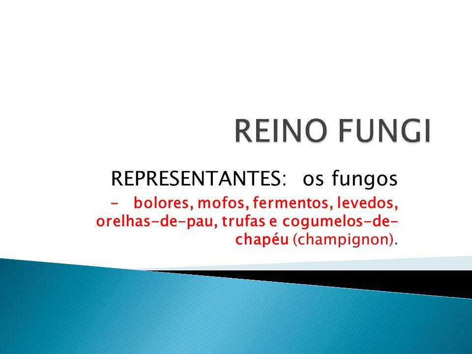 REINO FUNGI REPRESENTANTES: os fungos