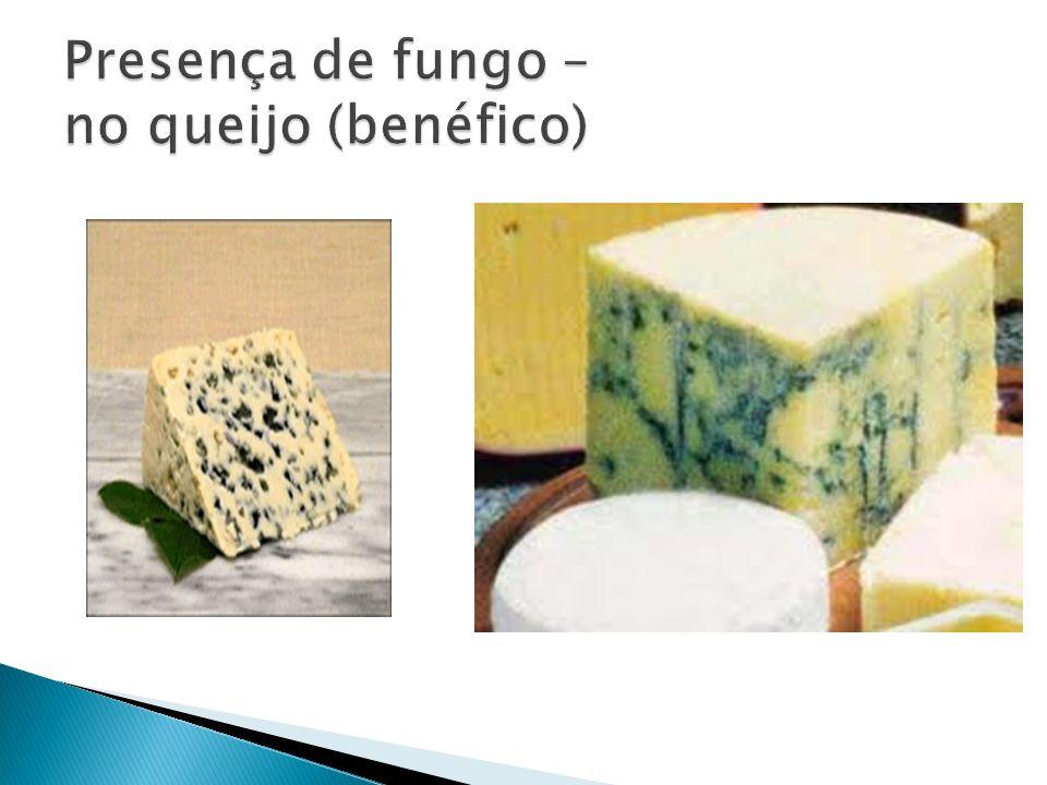 Presença de fungo – no queijo (benéfico)