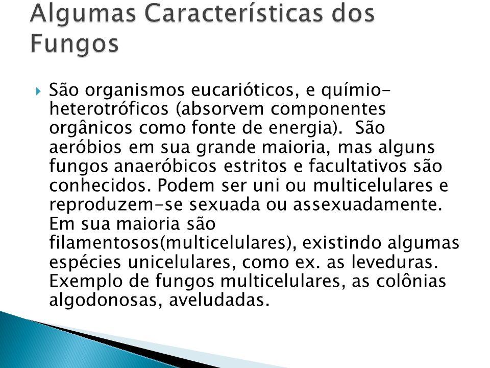 Algumas Características dos Fungos