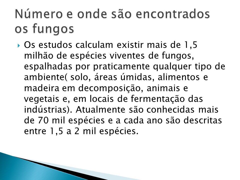Número e onde são encontrados os fungos