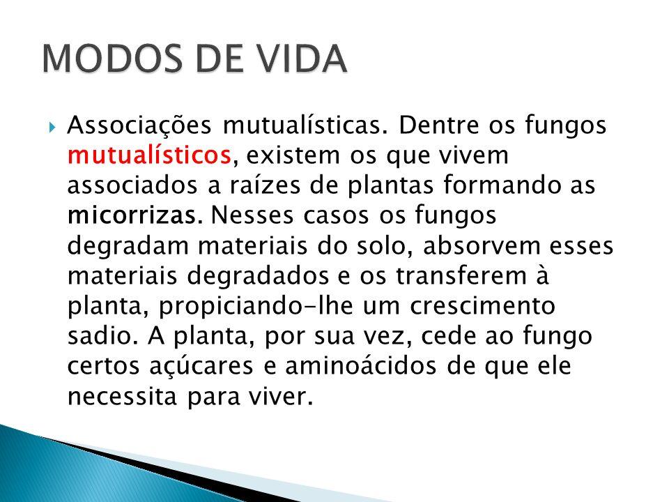 MODOS DE VIDA