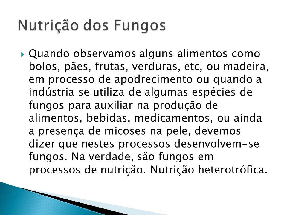 Nutrição dos Fungos