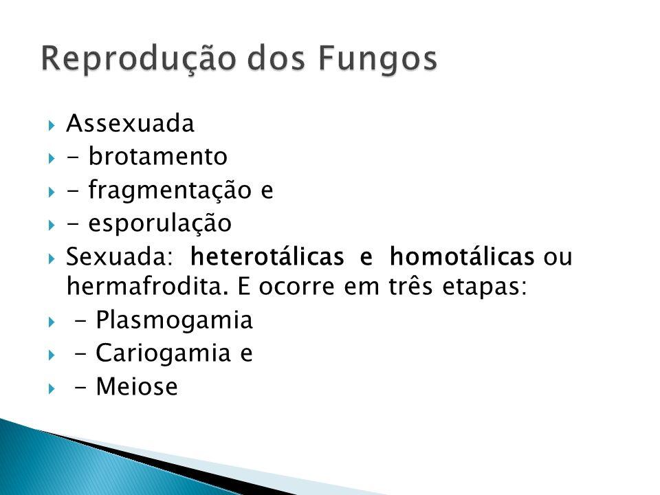 Reprodução dos Fungos Assexuada - brotamento - fragmentação e