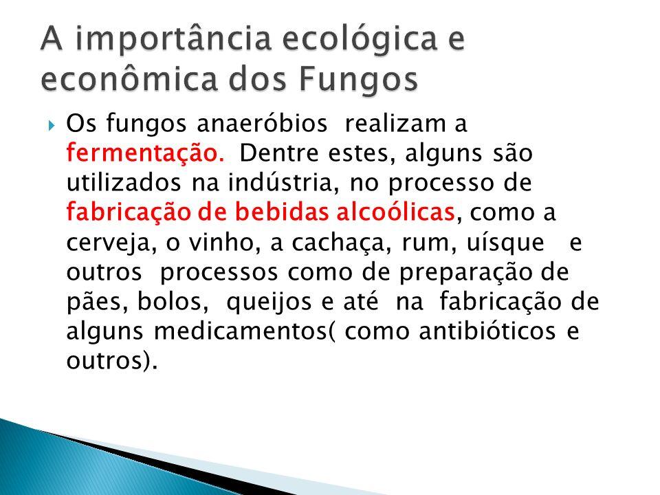 A importância ecológica e econômica dos Fungos