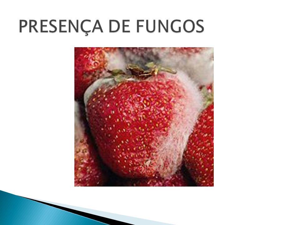 PRESENÇA DE FUNGOS