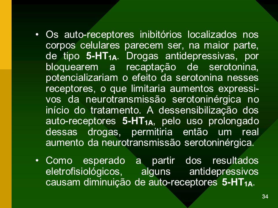 Os auto-receptores inibitórios localizados nos corpos celulares parecem ser, na maior parte, de tipo 5-HT1A. Drogas antidepressivas, por bloquearem a recaptação de serotonina, potencializariam o efeito da serotonina nesses receptores, o que limitaria aumentos expressi- vos da neurotransmissão serotoninérgica no início do tratamento. A dessensibilização dos auto-receptores 5-HT1A, pelo uso prolongado dessas drogas, permitiria então um real aumento da neurotransmissão serotoninérgica.