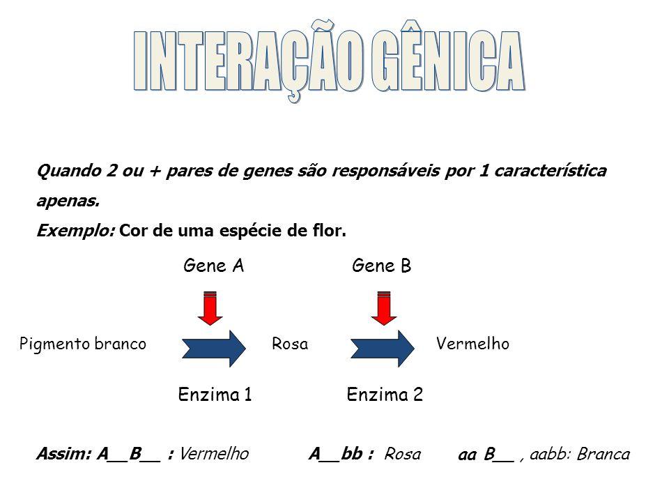 INTERAÇÃO GÊNICA Gene A Gene B Enzima 1 Enzima 2