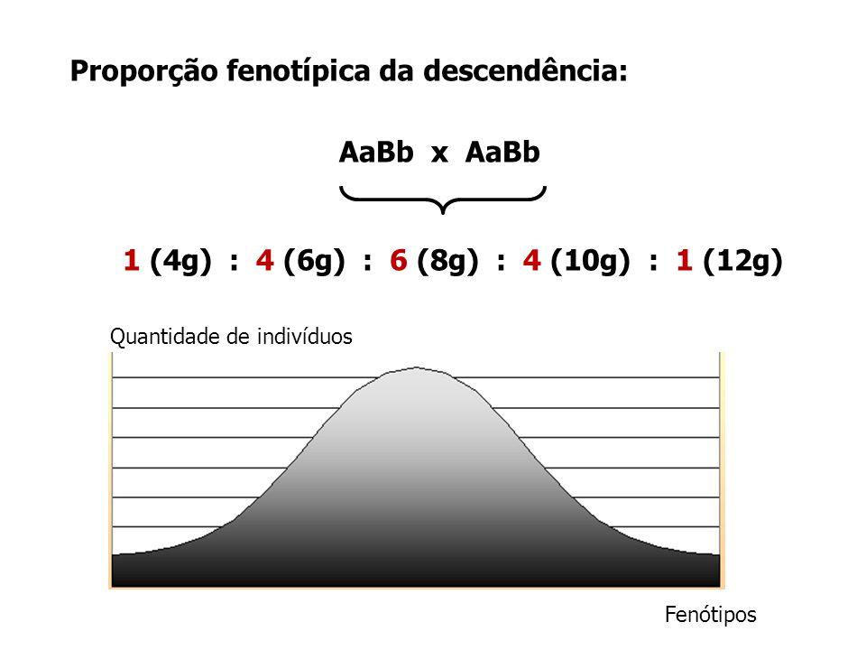 AaBb x AaBb 1 (4g) : 4 (6g) : 6 (8g) : 4 (10g) : 1 (12g)