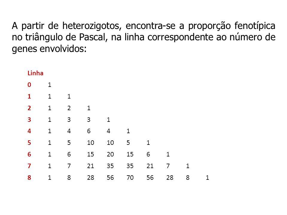 A partir de heterozigotos, encontra-se a proporção fenotípica no triângulo de Pascal, na linha correspondente ao número de genes envolvidos: