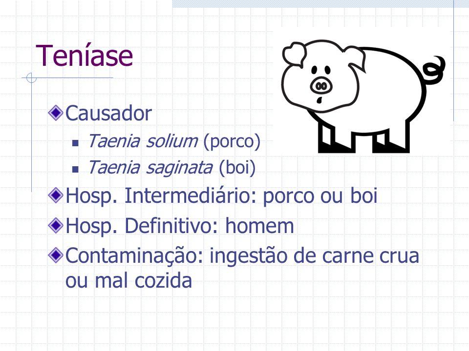 Teníase Causador Hosp. Intermediário: porco ou boi