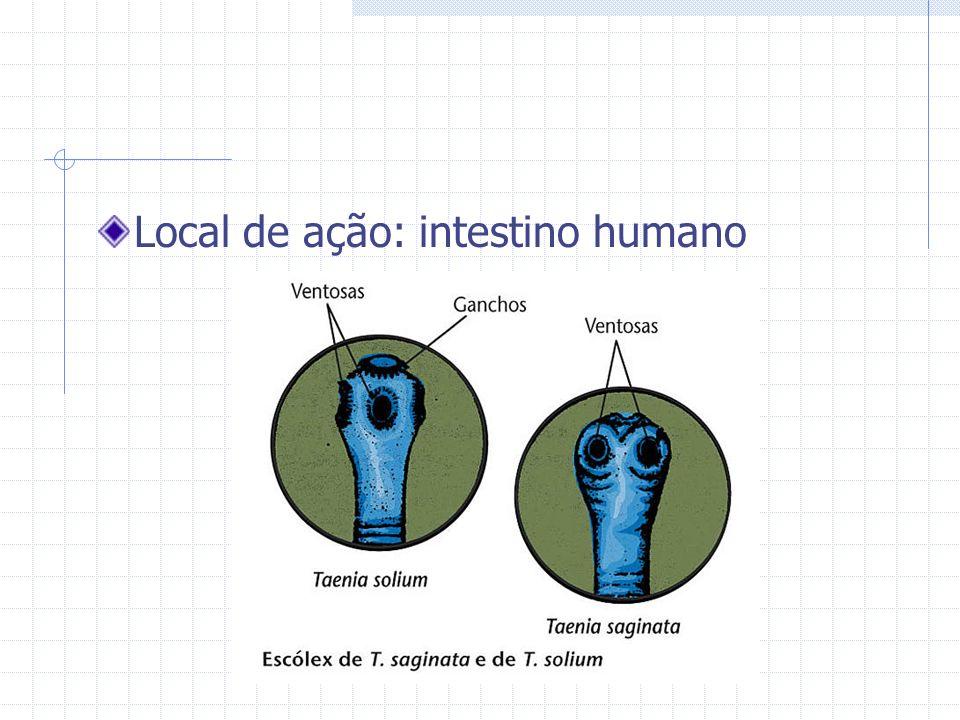 Local de ação: intestino humano