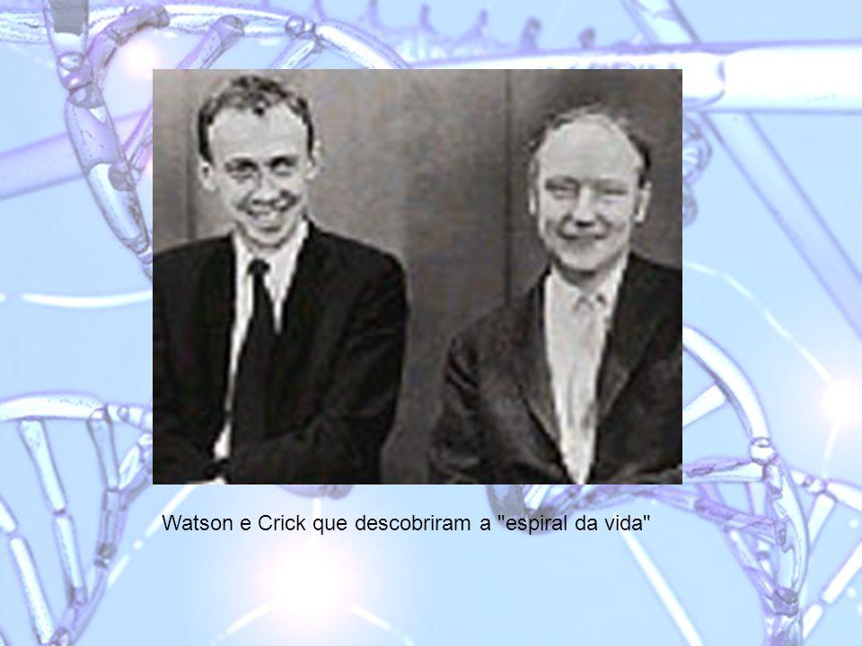 Watson e Crick que descobriram a espiral da vida