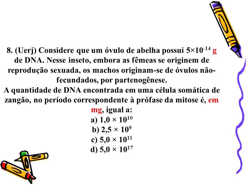 8. (Uerj) Considere que um óvulo de abelha possui 5×10-14 g de DNA