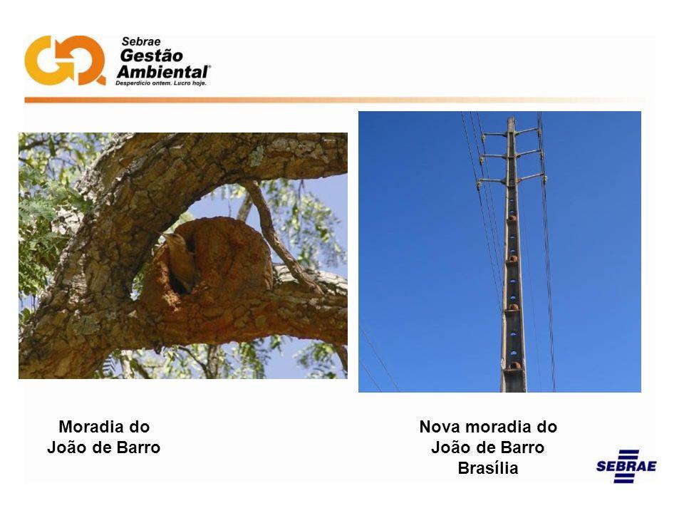 Moradia do João de Barro Nova moradia do João de Barro Brasília