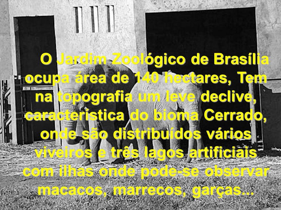 O Jardim Zoológico de Brasília ocupa área de 140 hectares, Tem na topografia um leve declive, característica do bioma Cerrado, onde são distribuídos vários viveiros e três lagos artificiais com ilhas onde pode-se observar macacos, marrecos, garças...