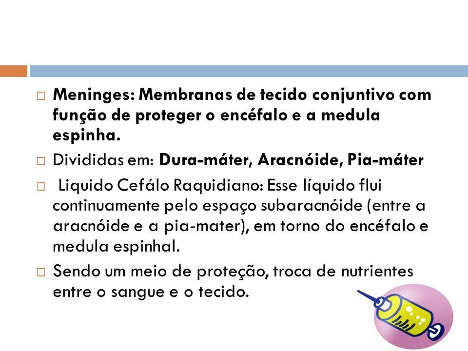Meninges: Membranas de tecido conjuntivo com função de proteger o encéfalo e a medula espinha.