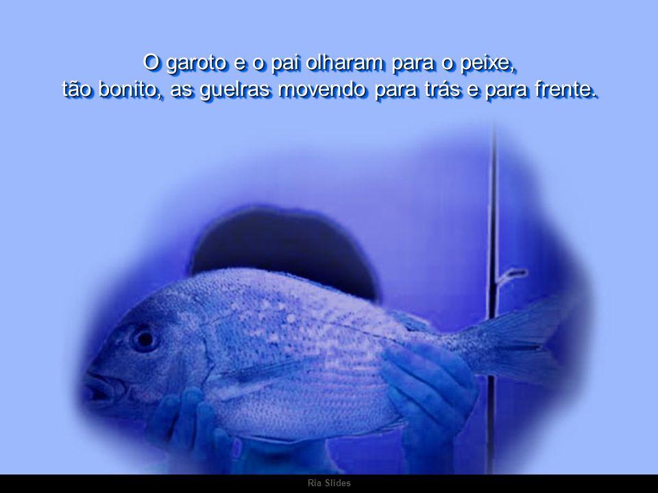 O garoto e o pai olharam para o peixe, tão bonito, as guelras movendo para trás e para frente.